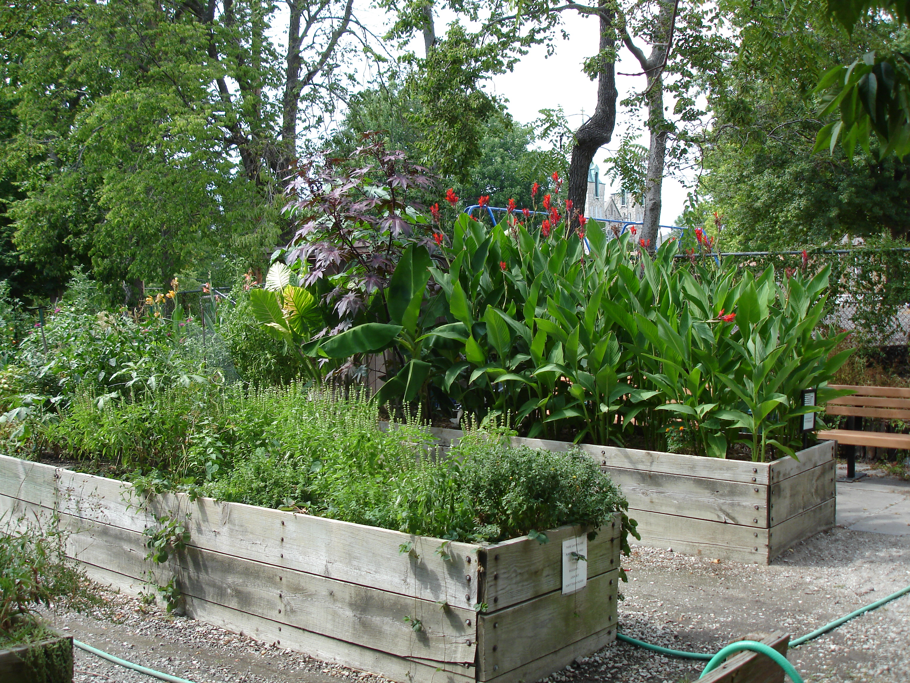 The adapted gardens in Paquin Park